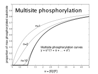 Multisite phosphorylation
